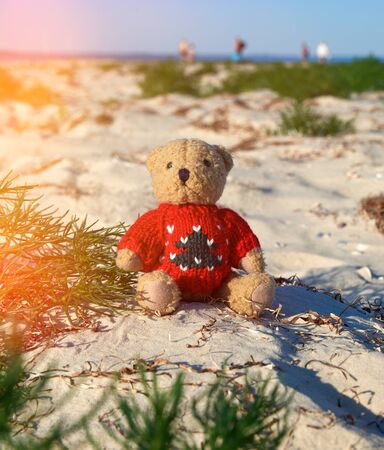 brown teddy bear in a red sweater sitting  on the sandy seashore,  concept of loneliness