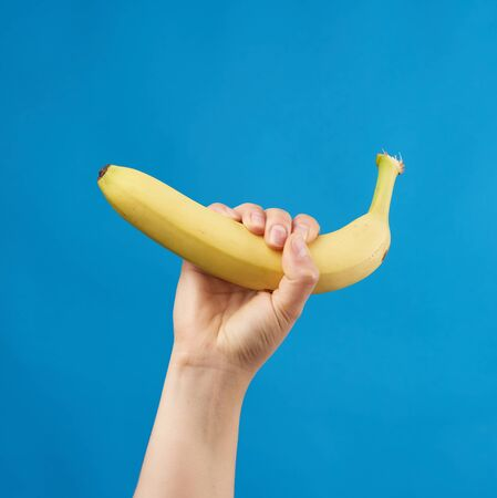 female hand holds a yellow ripe banana on a blue background, delicious fruit Zdjęcie Seryjne