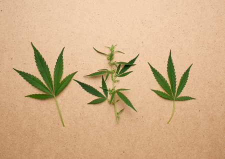 hree green leaves of hemp on a brown background, top view Imagens