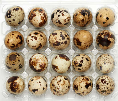 raw whole quail eggs in a plastic tray, top view, close up