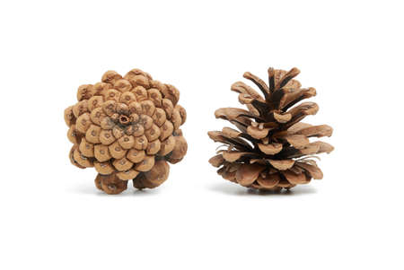 dry brown conifer cone isolated on white background, pine seeds, close up