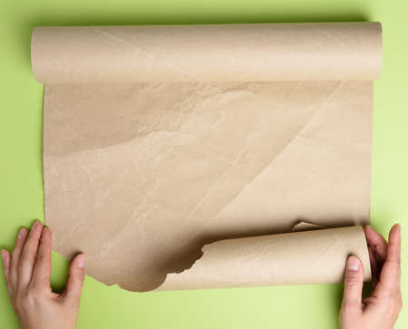two female hands hold rolled brown paper, green background, top view, copy space Фото со стока