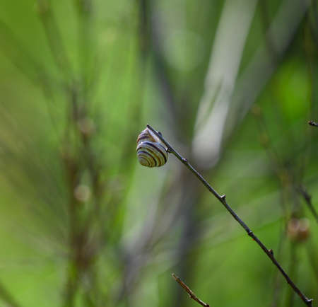 little park snail sits on a branch, spring sunny day, close up 免版税图像