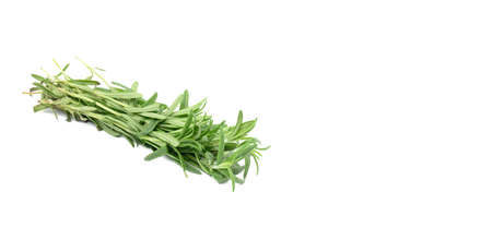 fresh sprig of rosemary with green leaves isolated on white background, fragrant seasoning, cope space 免版税图像