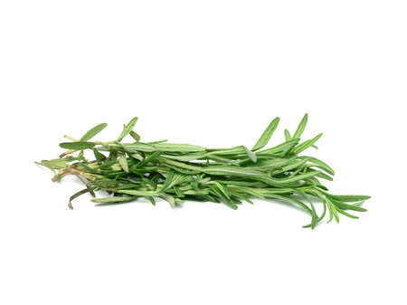 fresh sprig of rosemary with green leaves isolated on white background, fragrant seasoning