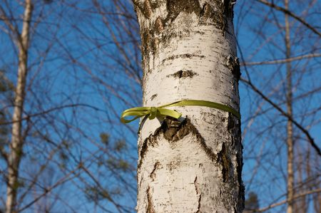 Green ribbon tied in a bow in birch Stock Photo - 4729984