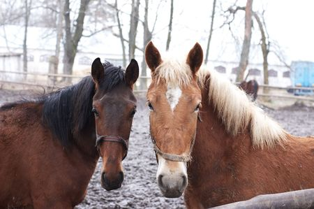 Two horses in outdoor enclosure photo