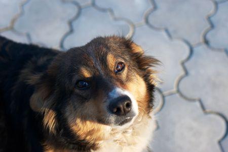 pleading: Pleading look of homeless dog