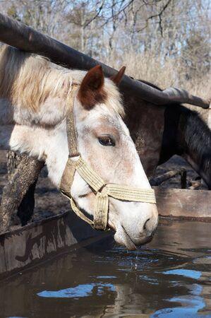 caballo bebe: Caballo estanque de agua potable