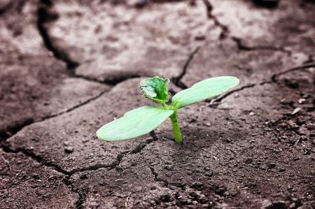 Green newborn sprout on chapped earth  photo