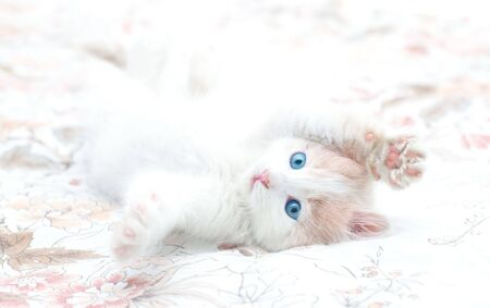 Young kitten with blue eyes in playful mood Stock Photo - 6146271
