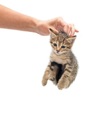 incapacitated: Woman seized kitten by the scruff of the neck