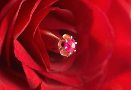 Ring with ruby in red rose photo