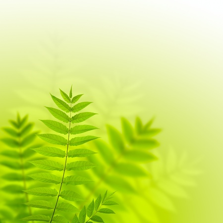 rainforest background: Fern leaves in sunny day Stock Photo