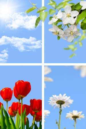Spring collage  blue sky with sun, blooming apple-tree, tulips and daisy photo
