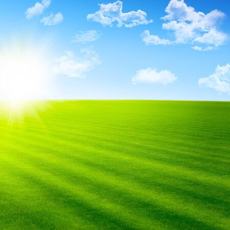 Beautiful landscape with green field and sun Stock Photo - 12653384