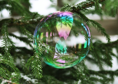 futile: A bubble sitting on a fir-tree branch