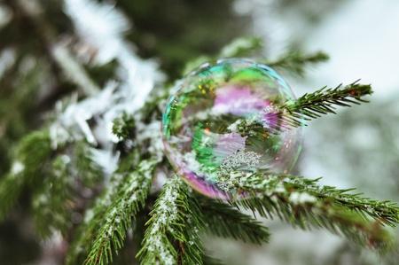daremny: Bubble siedzi na gałęzi jodły
