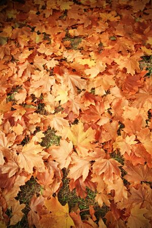 Colorful background of autumn leaves Stock Photo - 10718011