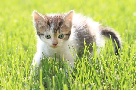 adorable young cat in the grass photo