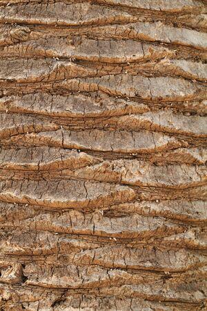 boom kappen: een textuur van de palmboom, snijden door menselijke Stockfoto
