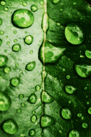緑の葉と水が値下がりしました詳細 写真素材