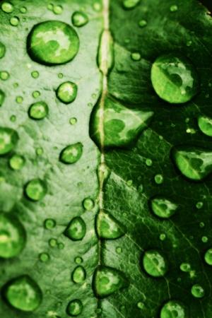 groene blad en water drops detail Stockfoto