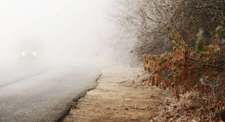 Autumn road and fog and the silhouette of trees photo