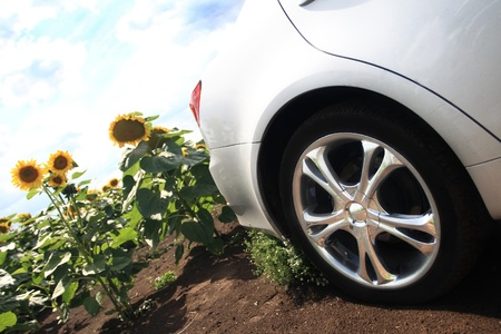 sunflower field and car detail Stock Photo - 12862170