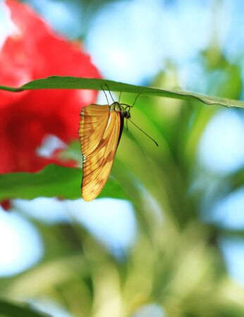 Yellow butterfly resting on a green leaf photo