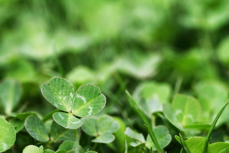 Horizontal Green Clover Shamrock Background Stock Photo - 13213443