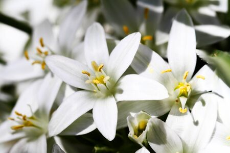 macro of white flowers on dark background Stock Photo - 14235388