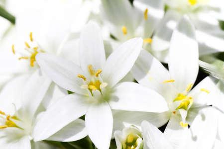 macro of white flowers on light background Stock Photo - 14235380