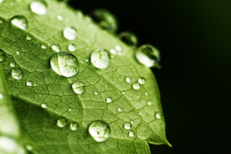 green leaf and water drops detail