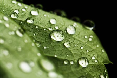 green leaf and water drops detail photo