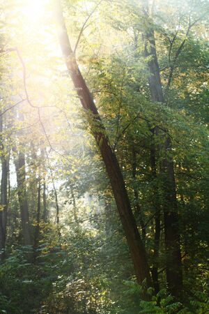 Morning sun beams in the autumn park Stock Photo - 16687077