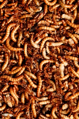many ugly worms as background Stock Photo - 16913218