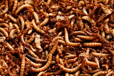 many ugly worms as background Stock Photo - 16913145
