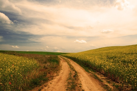 Colourful field of rapeseed Stock Photo - 17432233