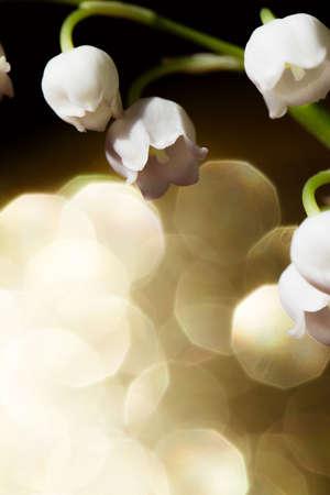 lirio blanco: Lirio de los valles - close up Foto de archivo