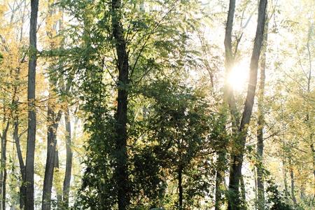 Morning sun beams in the autumn park Stock Photo - 19873973