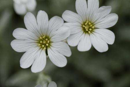 White rock flower garden edging Stock Photo - 21185592