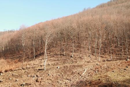 devastation: Industrial deforestation and logging Stock Photo