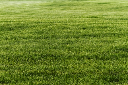 Natural fresh green grass - background texture photo