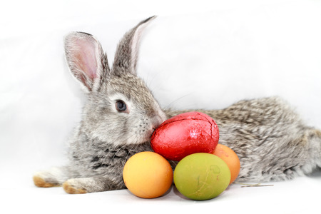 Cute gray rabbit with Easter eggs isolated on white photo