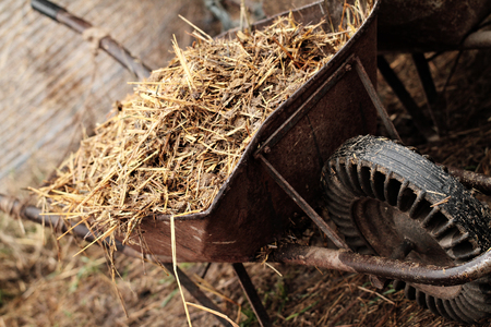 Wheelbarrow full of straw - close up photo