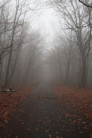 Road in the foggy autumn day photo