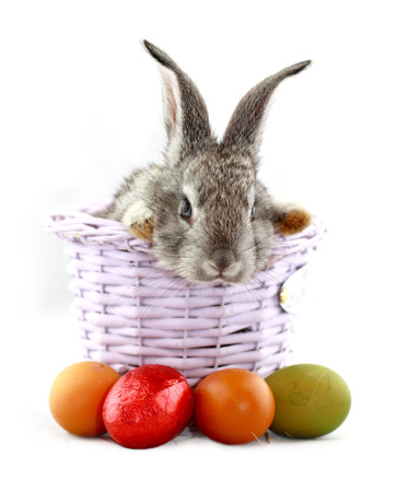 Fluffy gray rabbit in basket with Easter eggs isolated on white Zdjęcie Seryjne