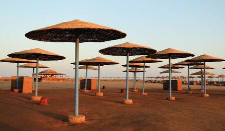 el sheikh: Umbrellas on the beach