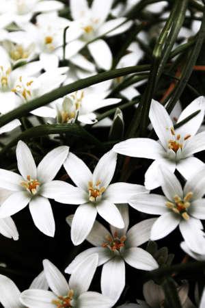 Close Up Foto Der Schönen Weißen Blumen Im Gras Lizenzfreie Fotos ...